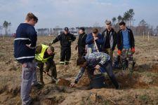 Społeczny las w Rogowie zasadzony