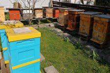 Pszczoły – mamy je chronić, a nie zabijać