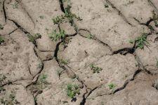 ARIMR kontynuuje wypłatę pomocy suszowej